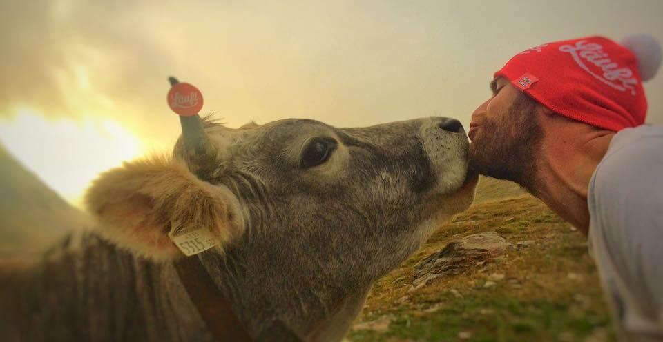 Läuft-Kuh