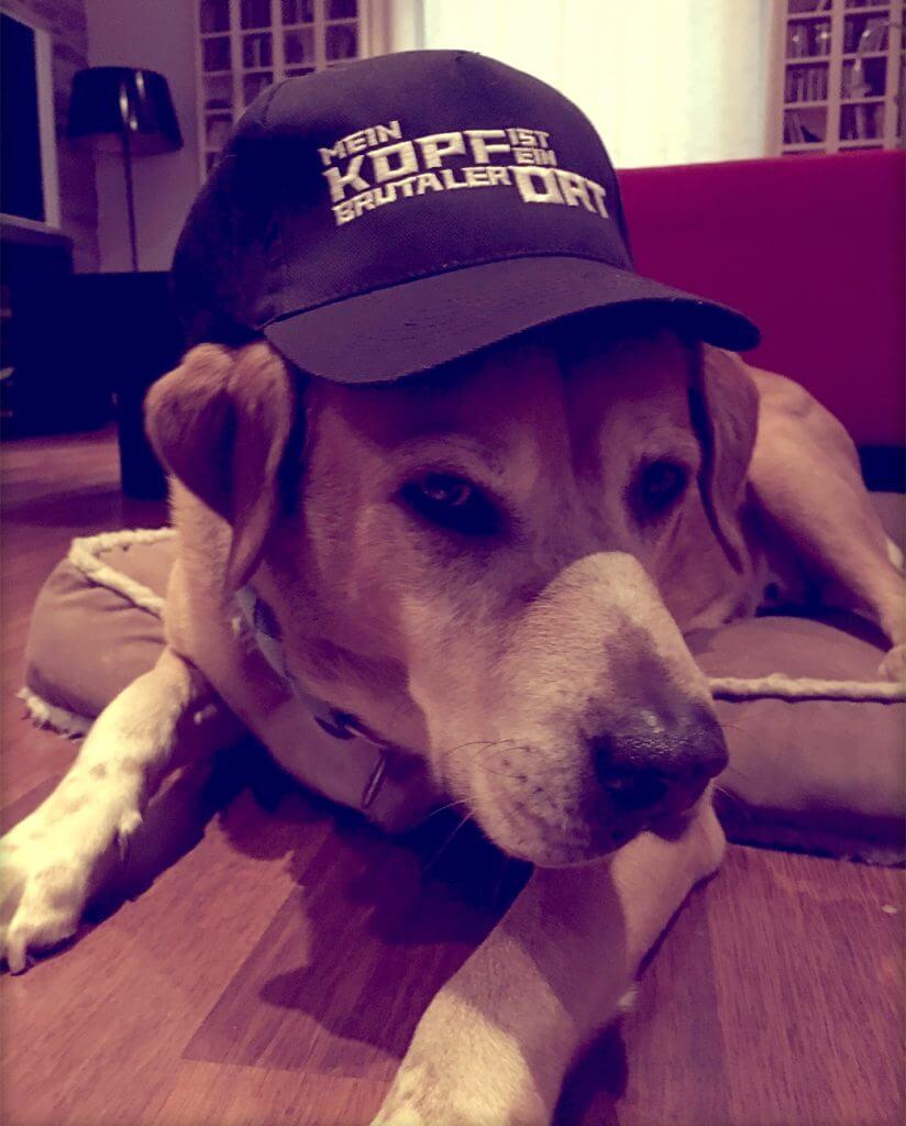 MKIEBO Hund mit Cap
