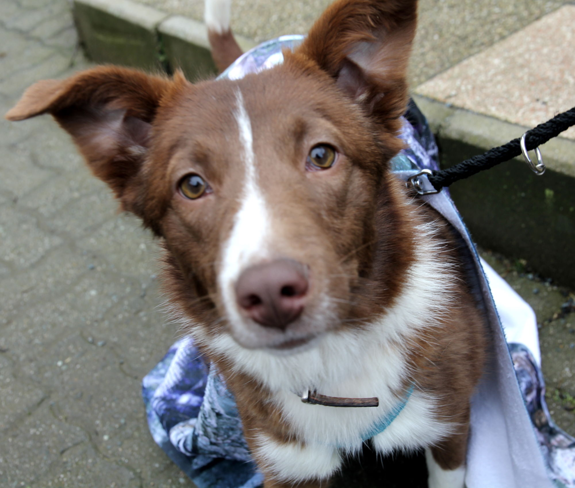 Tierheim Pfaffengrün Hund mit Badetuch