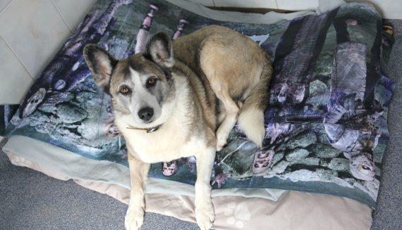 Haushund statt Reißwolf <br/>Duschtücher werden zu Tierdecken