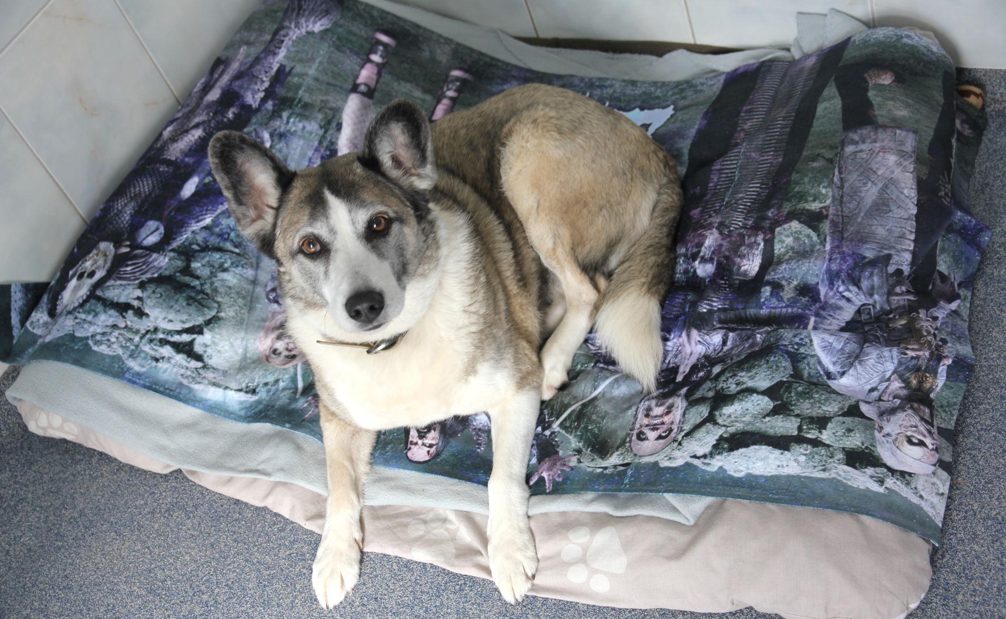 Haushund statt Reißwolf <br>Duschtücher werden zu Tierdecken